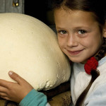 Cheese-Carpathian